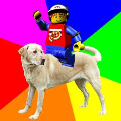 Pepper On Dog